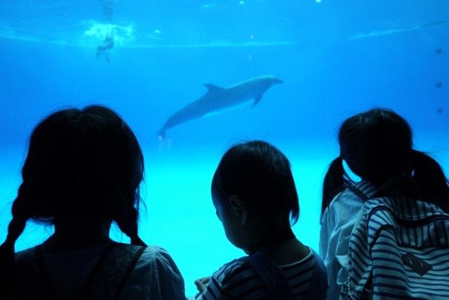 dolphin-over-a-head