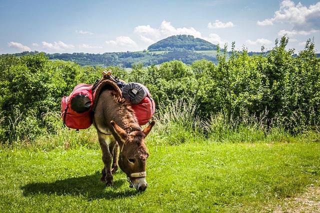 donkey-grazing
